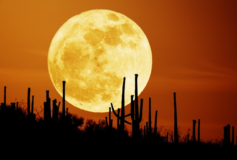 Harvest Moon with Saguaros.  Original Link: http://apod.nasa.gov/apod/image/0709/saguaroMoon_seip.jpg